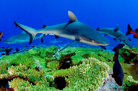 Лекарства из глубин океана