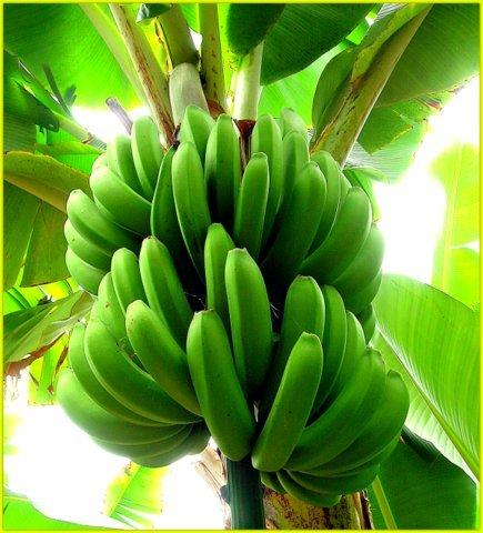 Банановые оладьи Фатал