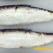 Рыба в карельском стиле