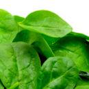 Шпинат — все о шпинате
