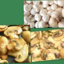 Быстрая закуска из грибов